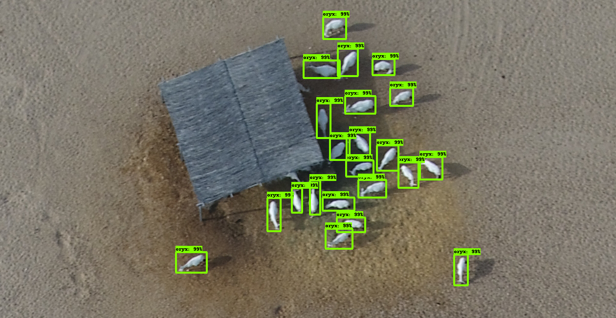 Case Study: Arabian Oryx Detection and Counting
